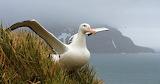 Endangered Species Albatross 02