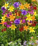 barwy ogrodu