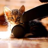~I'm Hiding...