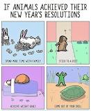Animal's Resolutions