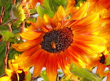 ☺♥ Sunflowers...