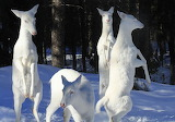 Herd of albino deer
