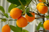healthy food-orange