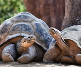 Tortoise Conversation