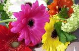 ^ Gerbera daisies with viburnum