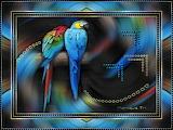 15-01-20-Perroquets