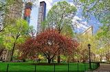 Normal Un-arbre-en-fleurs-dans-le-Madison-Square-park