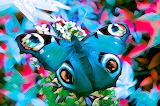 Butterfly-488