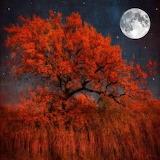 Arbre-lune-reflets