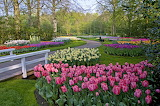 Netherlands Parks Spring Tulips Daffodils 546665 1280x850