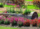 Spring Splash of Color Ponchatoula Louisiana USA