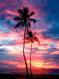 Palm Trees at the shore
