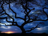 Sunset twisted tree