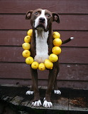 Lemon Dog
