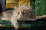 Reading makes me sleepy!