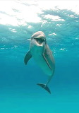 Dolphin or porpoise