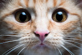 Cat-closeups-cute-face-big-eyes