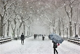 Winter - Central park, New York