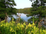 Landscape Finland - Photo from Piqsels id-zzbli