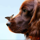 Umm...Butterfly, you are on my nose!