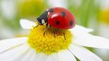Ladybug 01