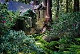 House Amongst Redwood Trees Cascade Canyon California USA