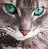 Emerald Eyes...