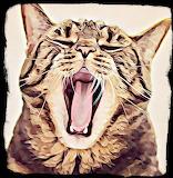 Wild Thing Caturday