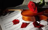 Flowers, notes, violin, roses, petals