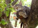 Sleeping cat light