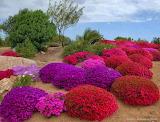 Garden of Azaleas