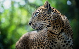 Animals wildlife nature (365)