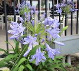 Interesting Purple Flower