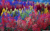 ^ Colorful garden flowers