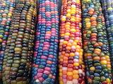 Corn series #3