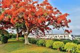 Trees, flowering, train