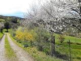 spring in Ariège