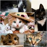 Cats galore!