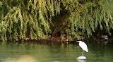 Bird white