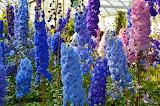 Delphinium Closeup Blue 570493 1280x847