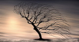 tree in the wind