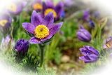 Beautiful flower in purple