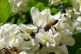 Flowers-bees