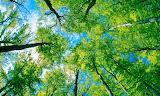 Forest-wallpaper-in-hd-with-blue-sky-and-green-leaves