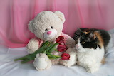 cute teddy bear with cat