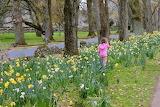 Cornwall Park Auckland NZ