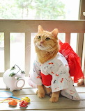 Geisha tea cat
