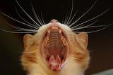 Kitty-yawn1