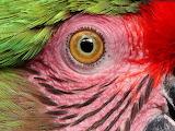 eye-parrot