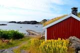 Red cottage on the seashore-Lofoten